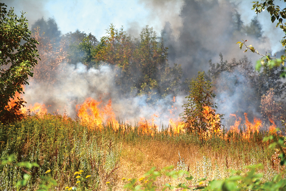 Wildfire spreads quick at KRP