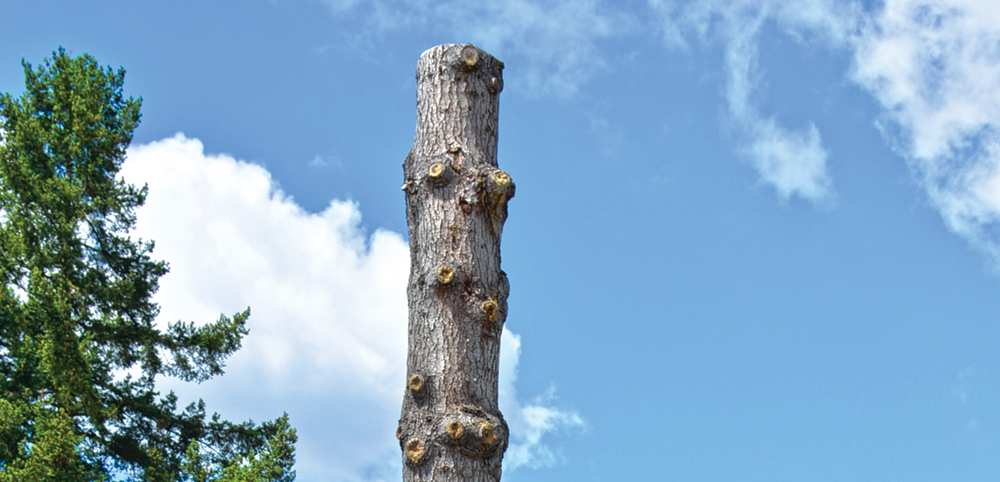 Design meetings set for story poles