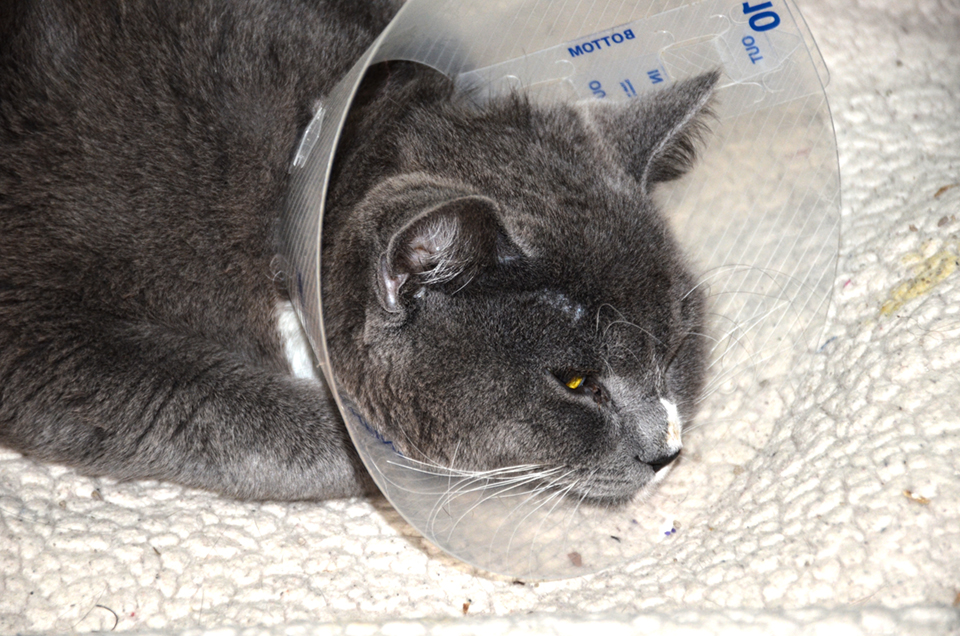 Eight lives to go: cat finds new leash on life